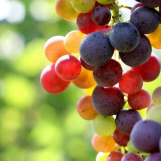 multi-color-grapes